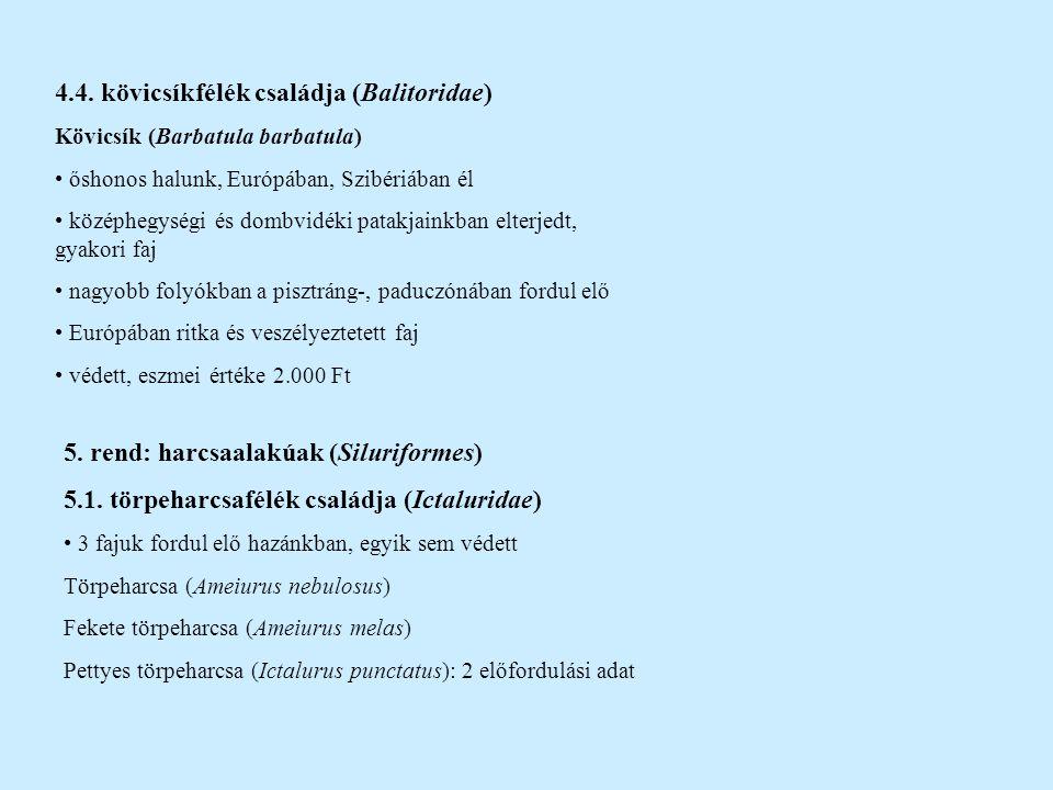 4.4. kövicsíkfélék családja (Balitoridae)