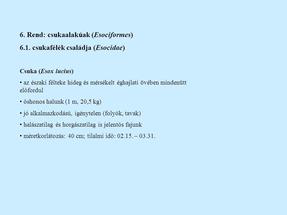 6. Rend: csukaalakúak (Esociformes)