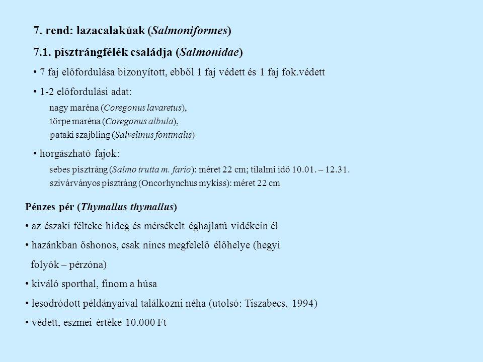 7. rend: lazacalakúak (Salmoniformes)