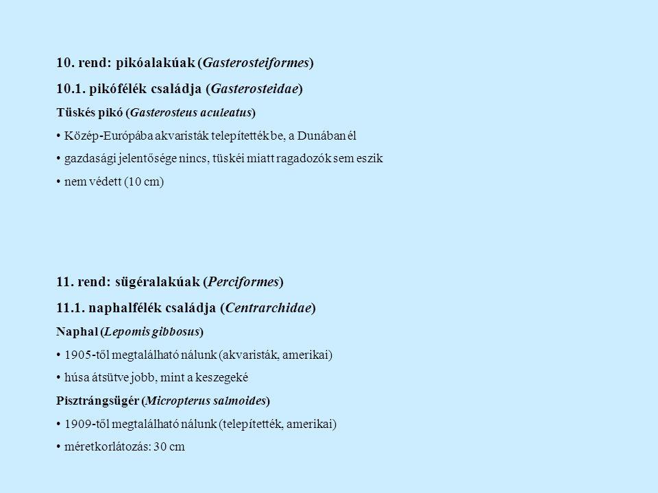 10. rend: pikóalakúak (Gasterosteiformes)