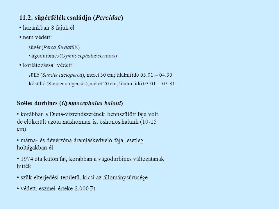 11.2. sügérfélék családja (Percidae)