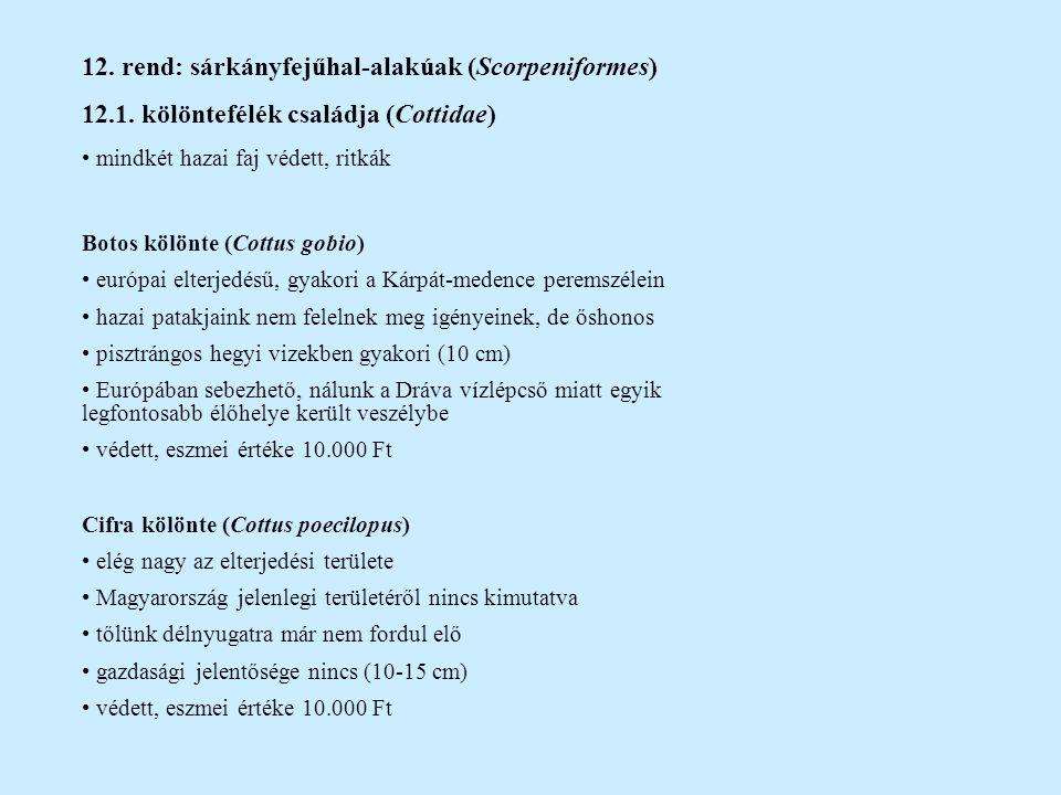 12. rend: sárkányfejűhal-alakúak (Scorpeniformes)