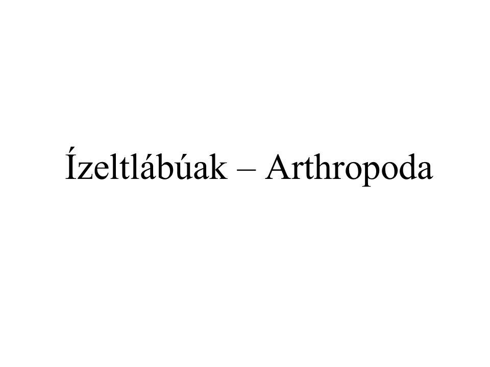 Ízeltlábúak – Arthropoda