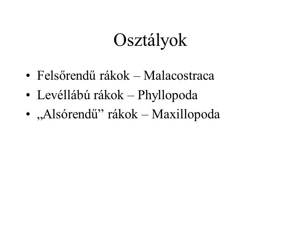 Osztályok Felsőrendű rákok – Malacostraca Levéllábú rákok – Phyllopoda