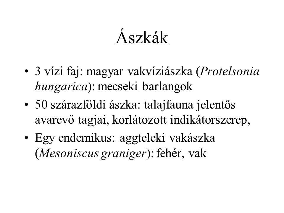 Ászkák 3 vízi faj: magyar vakvíziászka (Protelsonia hungarica): mecseki barlangok.