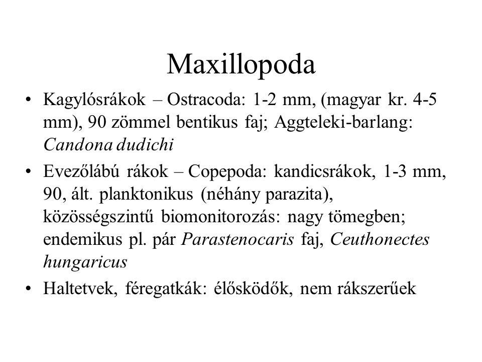 Maxillopoda Kagylósrákok – Ostracoda: 1-2 mm, (magyar kr. 4-5 mm), 90 zömmel bentikus faj; Aggteleki-barlang: Candona dudichi.