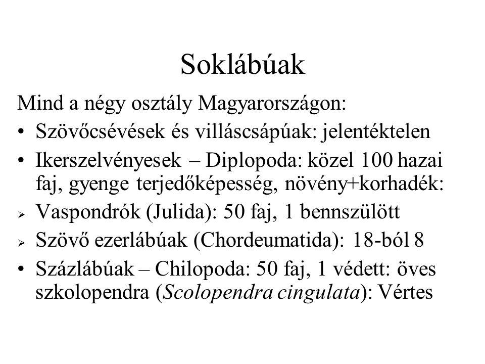 Soklábúak Mind a négy osztály Magyarországon: