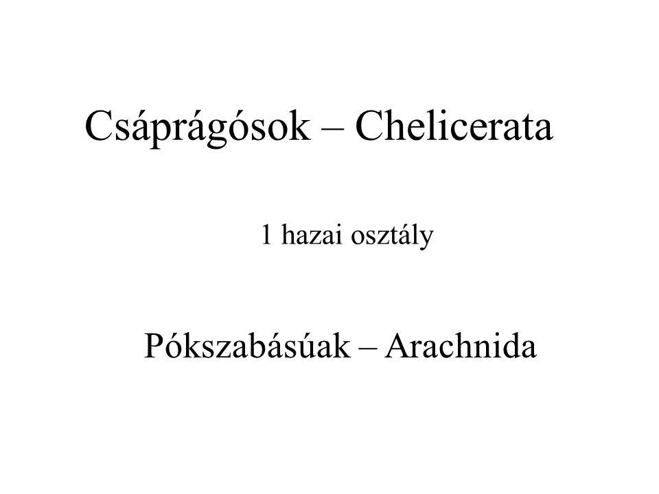 Csáprágósok – Chelicerata
