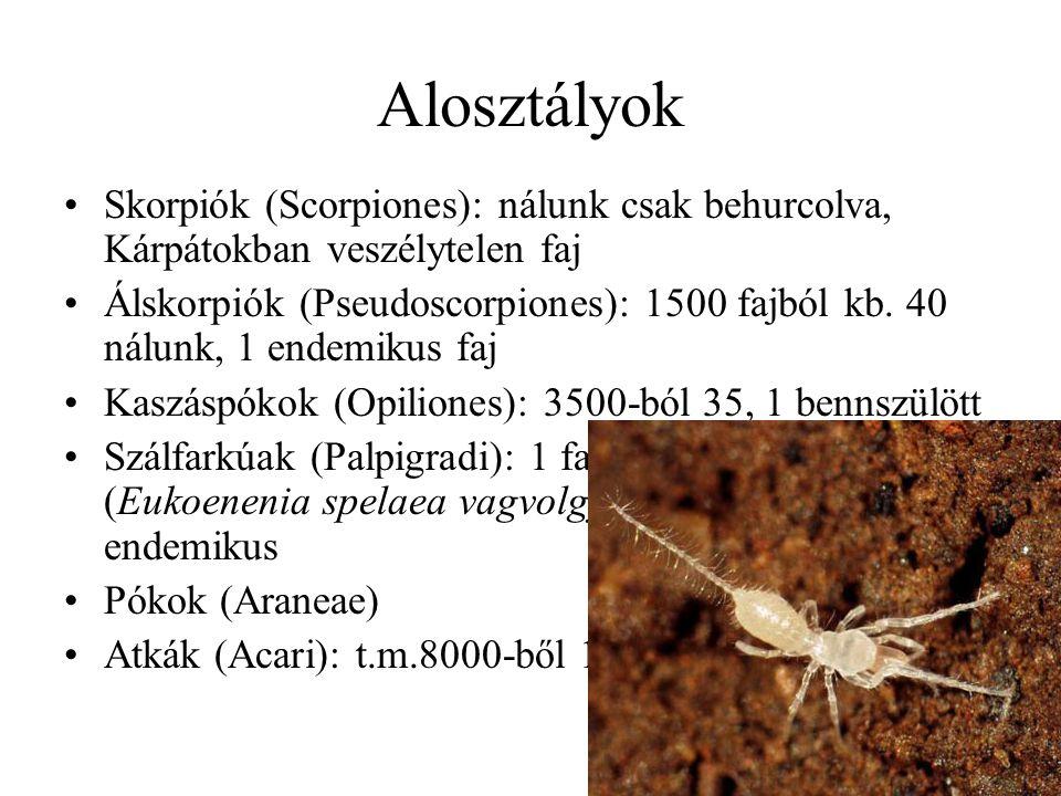 Alosztályok Skorpiók (Scorpiones): nálunk csak behurcolva, Kárpátokban veszélytelen faj.