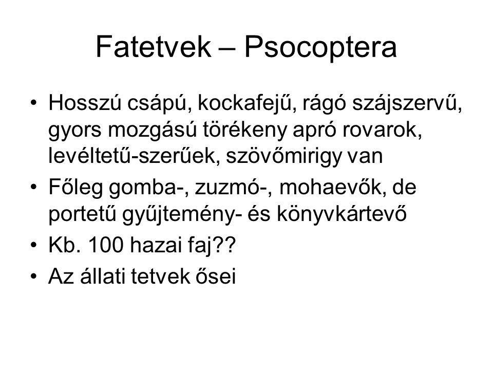 Fatetvek – Psocoptera Hosszú csápú, kockafejű, rágó szájszervű, gyors mozgású törékeny apró rovarok, levéltetű-szerűek, szövőmirigy van.
