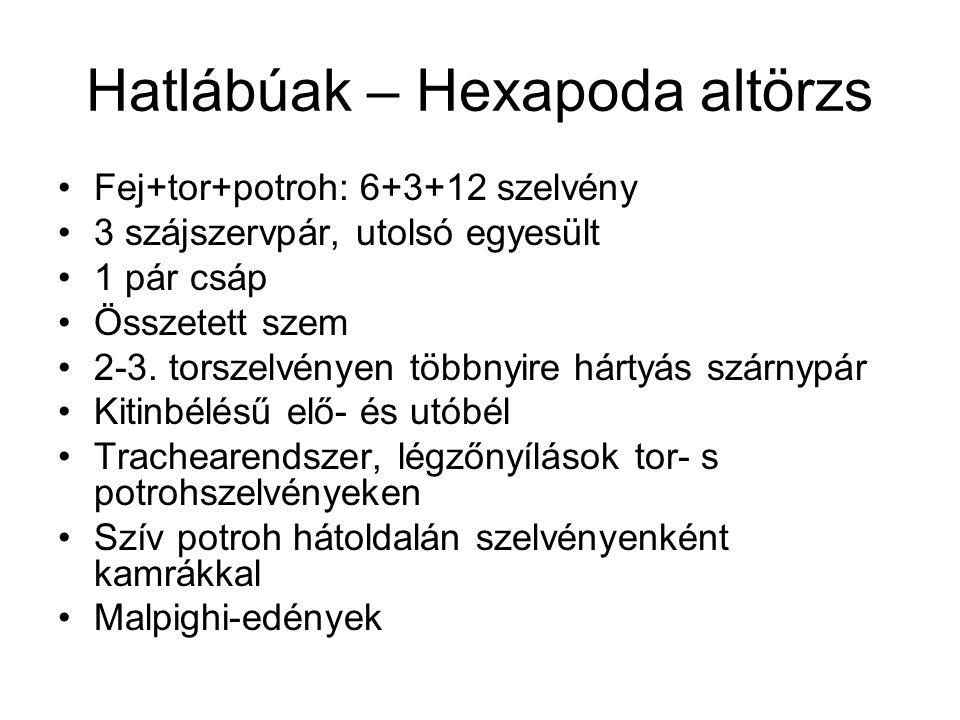 Hatlábúak – Hexapoda altörzs