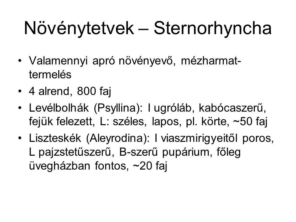 Növénytetvek – Sternorhyncha