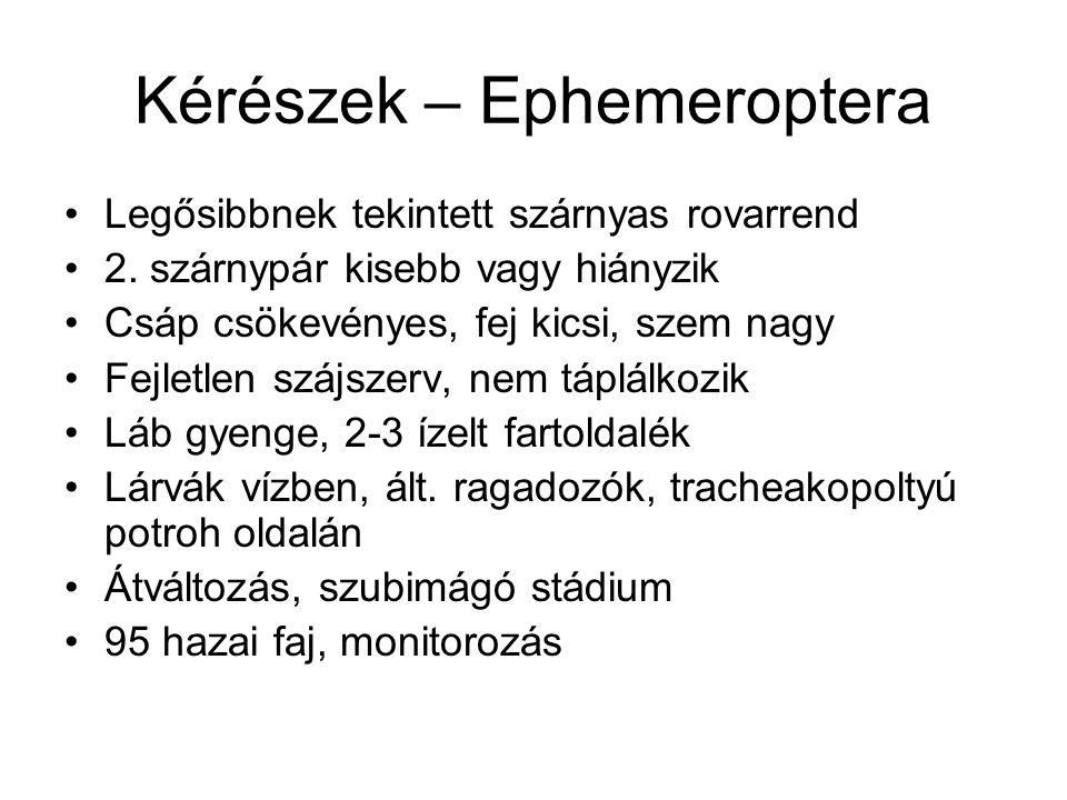 Kérészek – Ephemeroptera