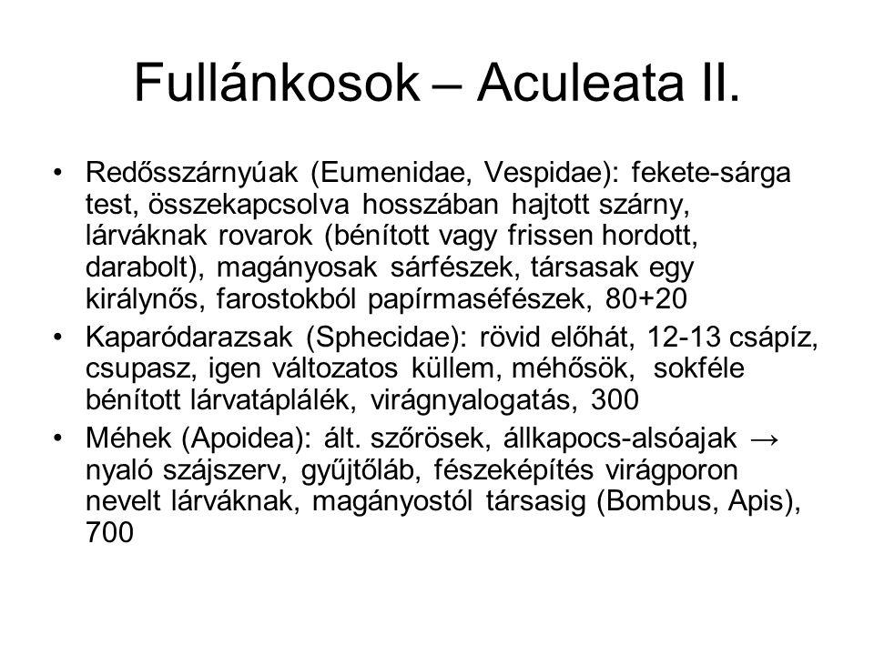 Fullánkosok – Aculeata II.