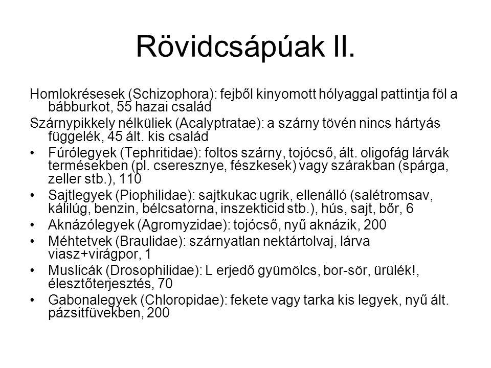 Rövidcsápúak II. Homlokrésesek (Schizophora): fejből kinyomott hólyaggal pattintja föl a bábburkot, 55 hazai család.