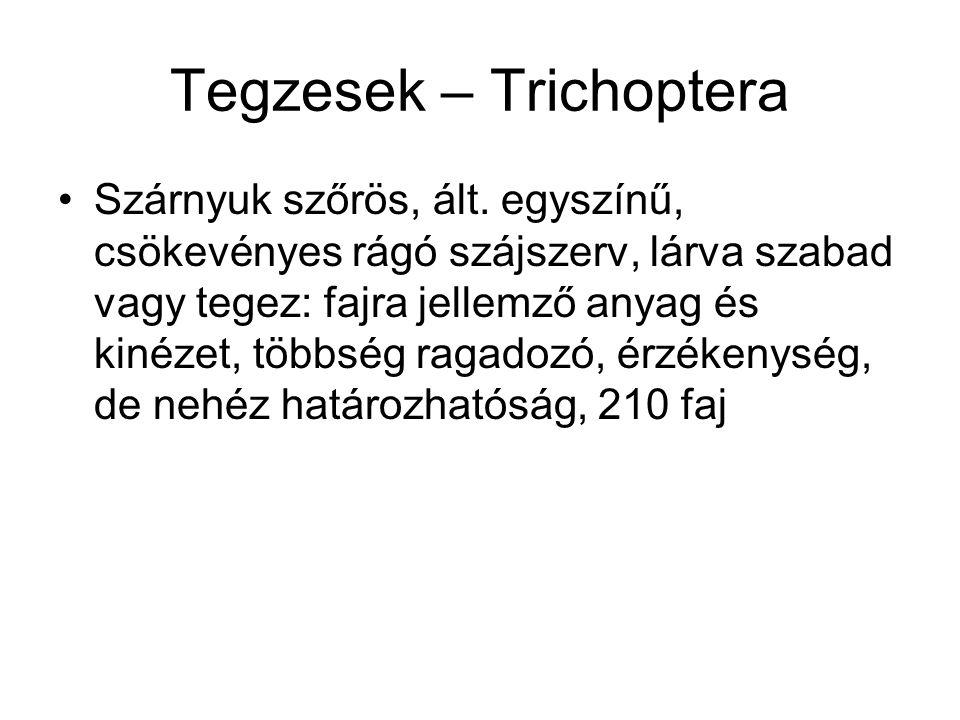 Tegzesek – Trichoptera