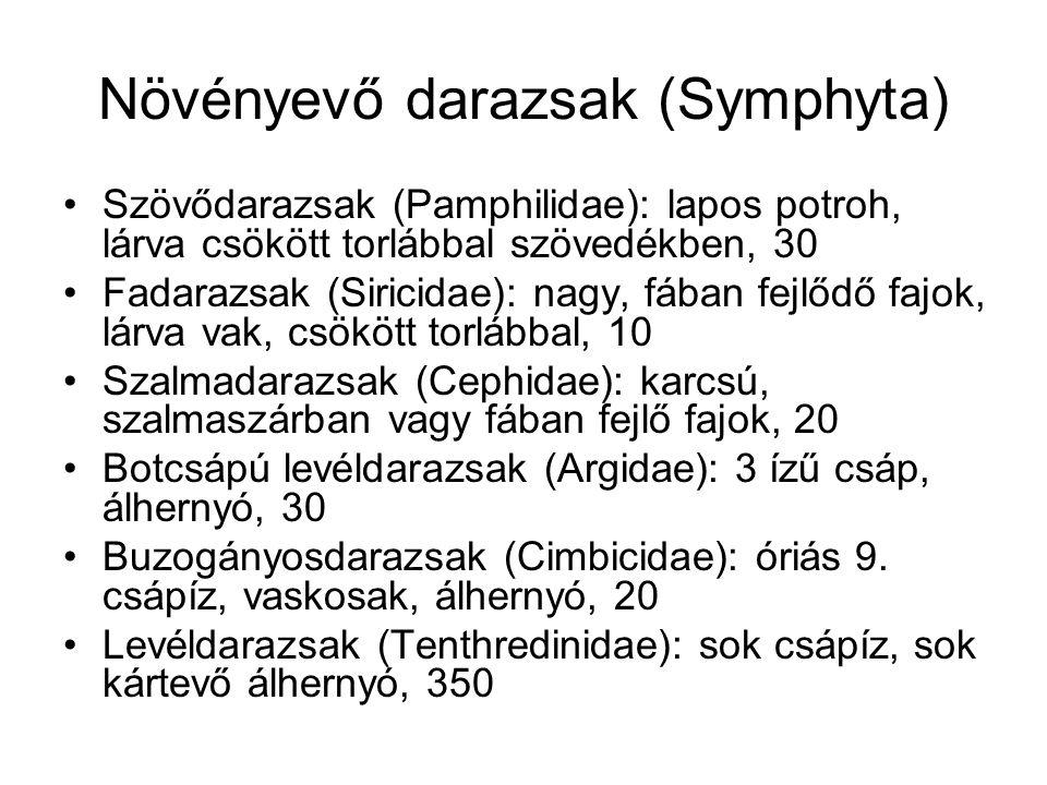 Növényevő darazsak (Symphyta)