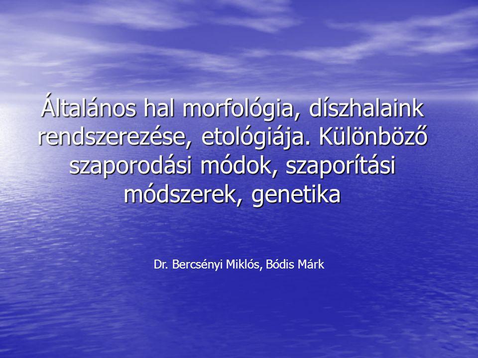 Dr. Bercsényi Miklós, Bódis Márk