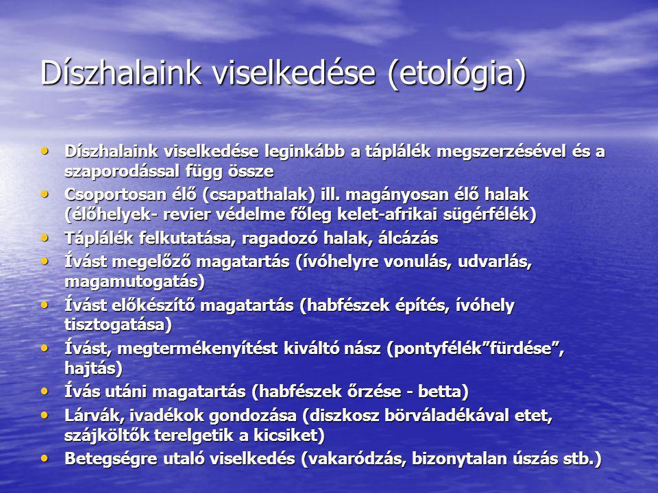 Díszhalaink viselkedése (etológia)