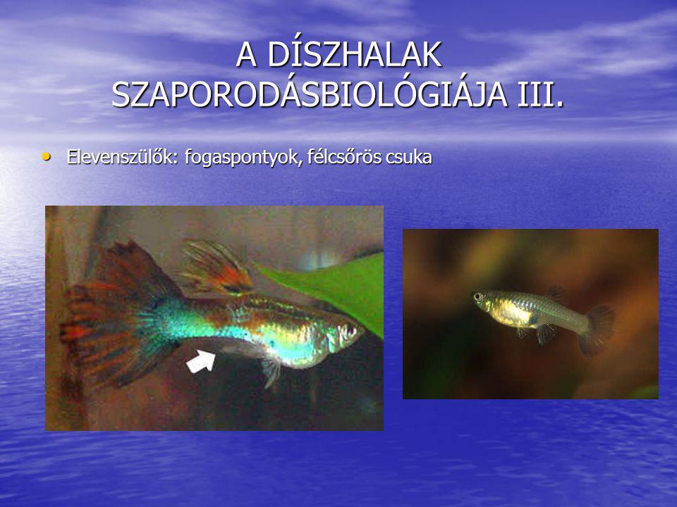 A DÍSZHALAK SZAPORODÁSBIOLÓGIÁJA III.