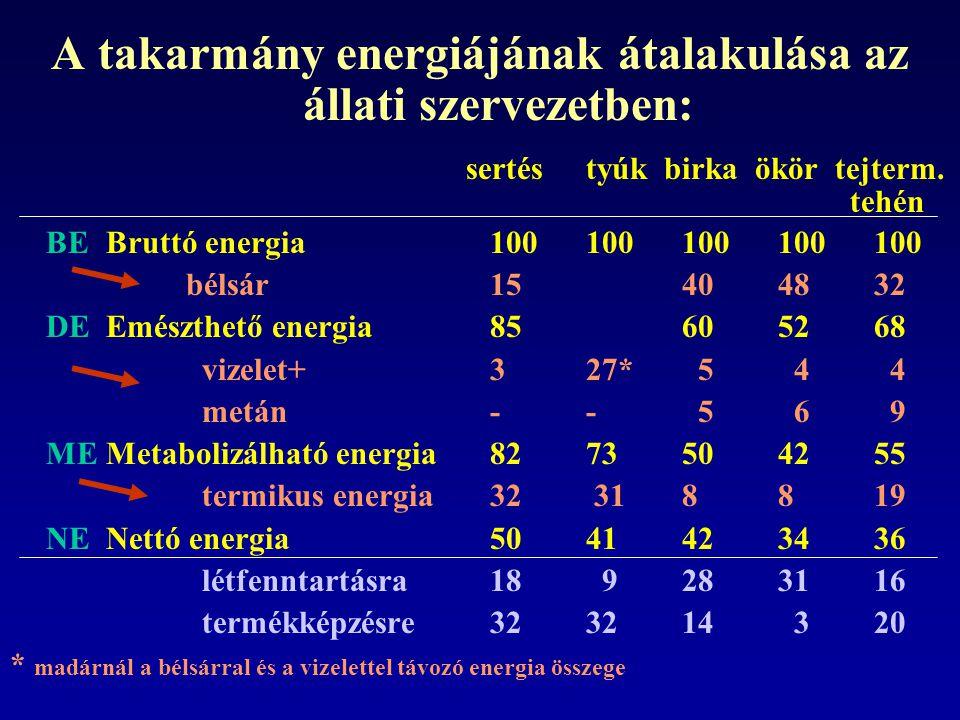 A takarmány energiájának átalakulása az állati szervezetben: