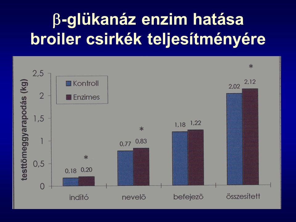 -glükanáz enzim hatása broiler csirkék teljesítményére