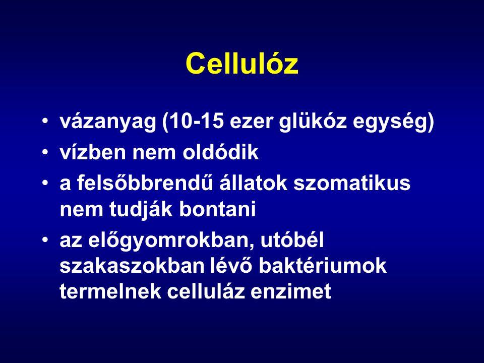 Cellulóz vázanyag (10-15 ezer glükóz egység) vízben nem oldódik