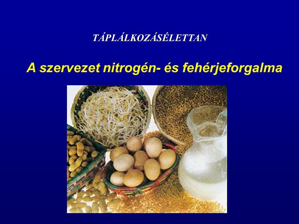 A szervezet nitrogén- és fehérjeforgalma