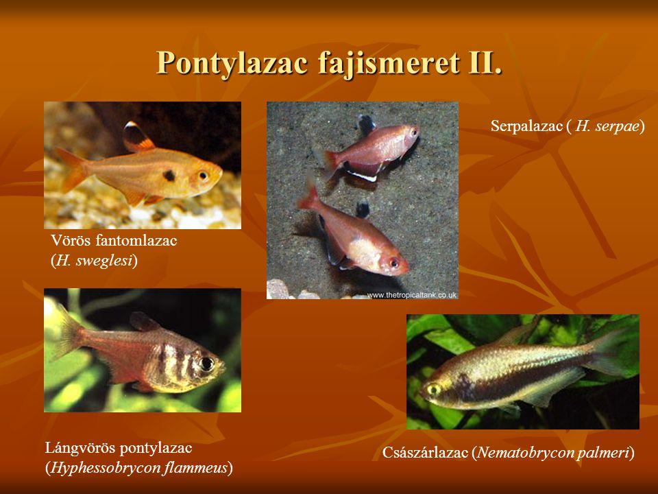 Pontylazac fajismeret II.