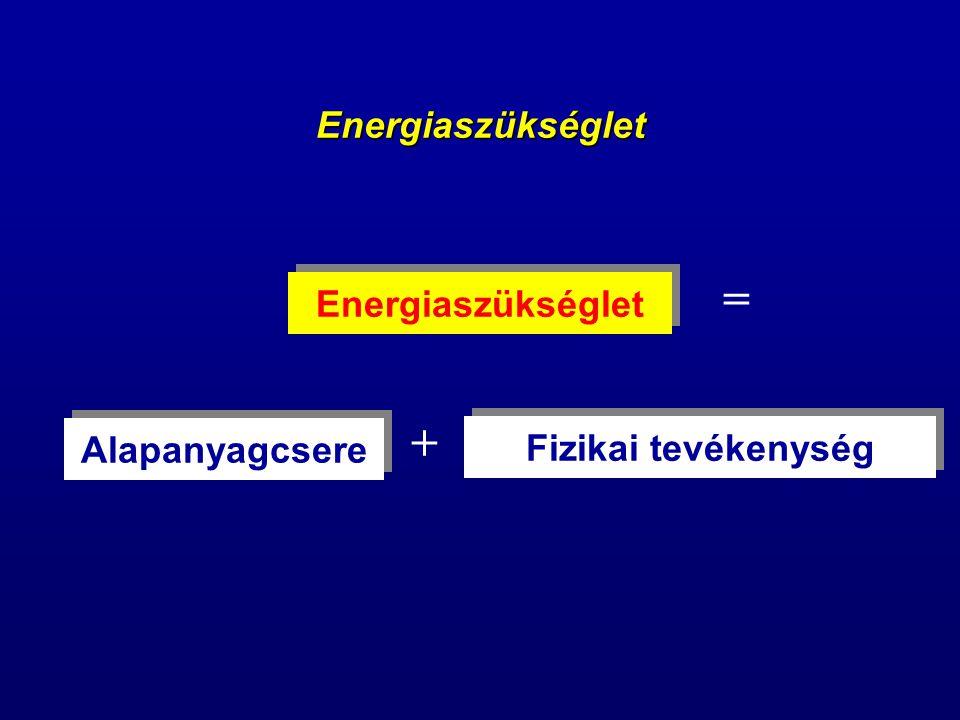 = + Energiaszükséglet Energiaszükséglet Alapanyagcsere