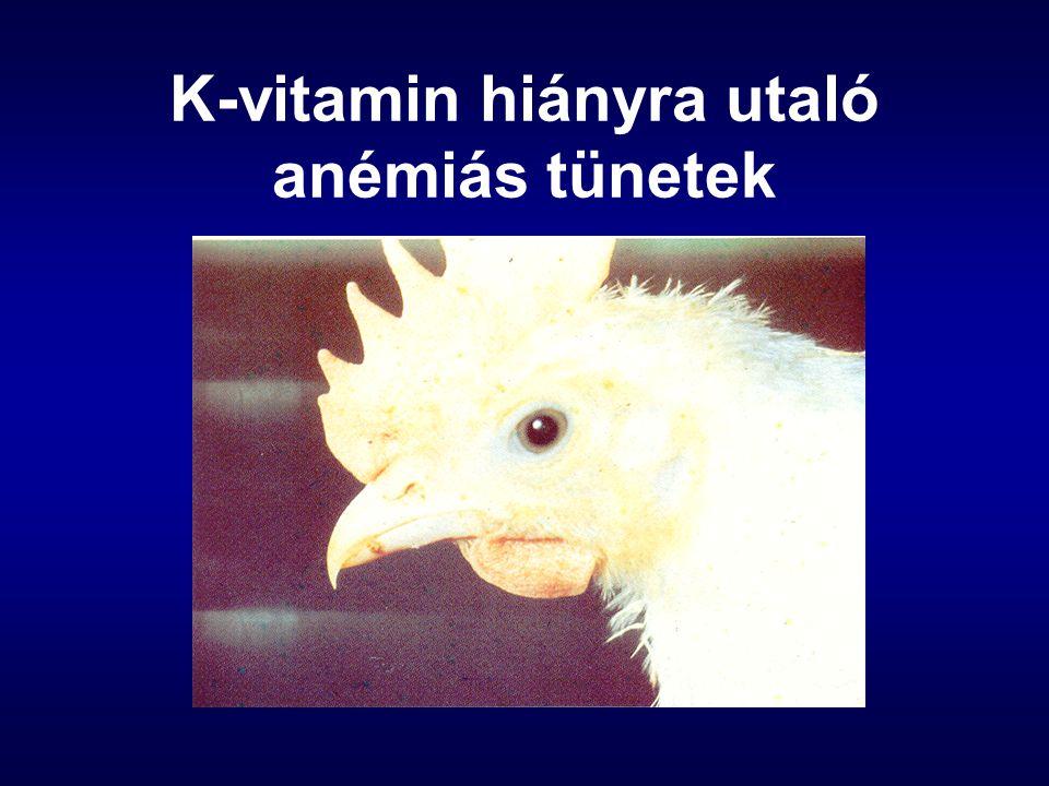 K-vitamin hiányra utaló anémiás tünetek