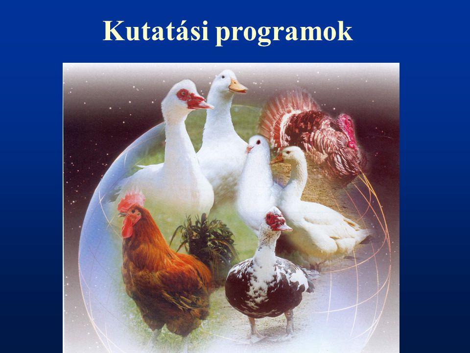 Kutatási programok