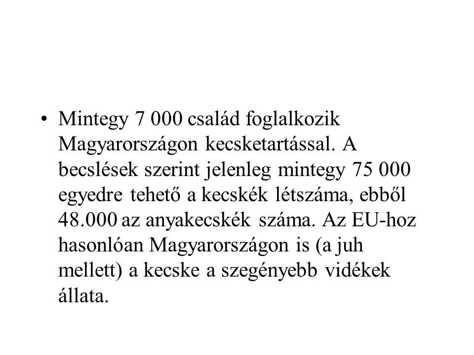 Mintegy 7 000 család foglalkozik Magyarországon kecsketartással
