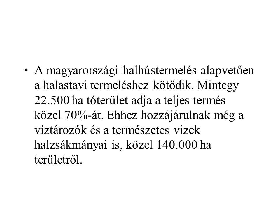 A magyarországi halhústermelés alapvetően a halastavi termeléshez kötődik.