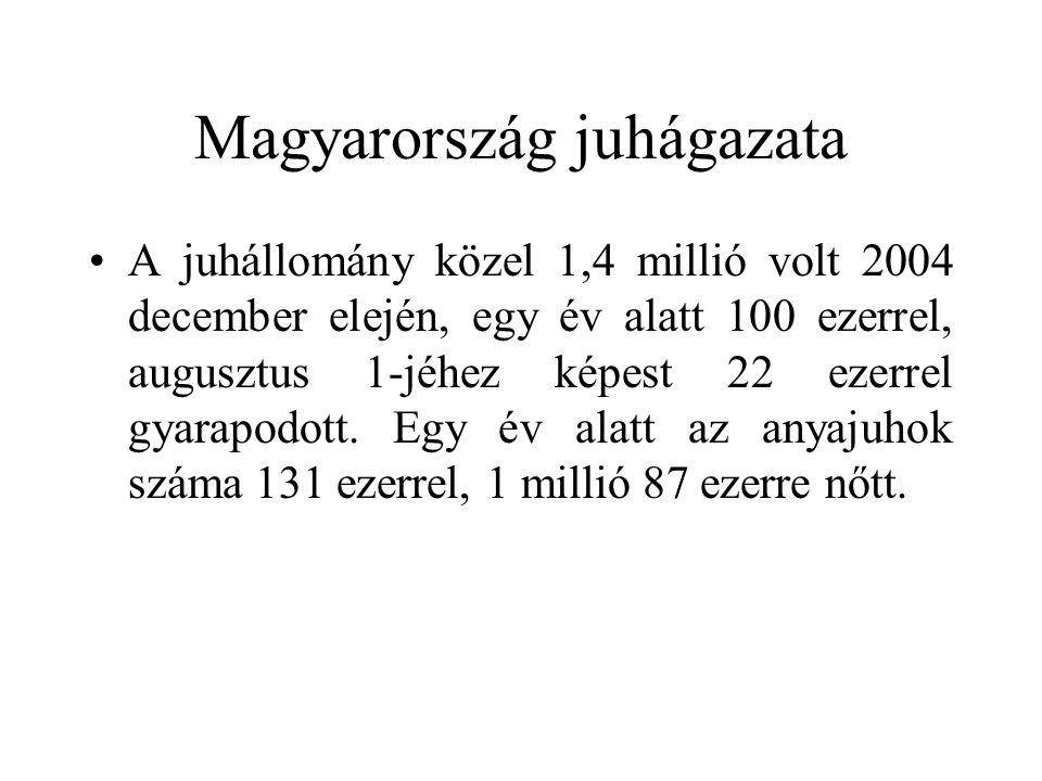 Magyarország juhágazata