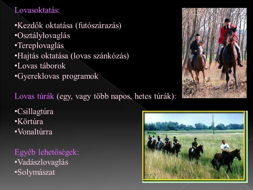Lovasoktatás: Kezdők oktatása (futószárazás) Osztálylovaglás. Tereplovaglás. Hajtás oktatása (lovas szánkózás)