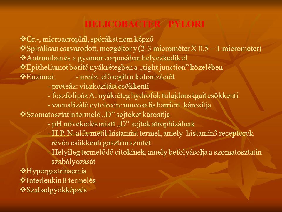HELICOBACTER PYLORI vGr.-, microaerophil, spórákat nem képző