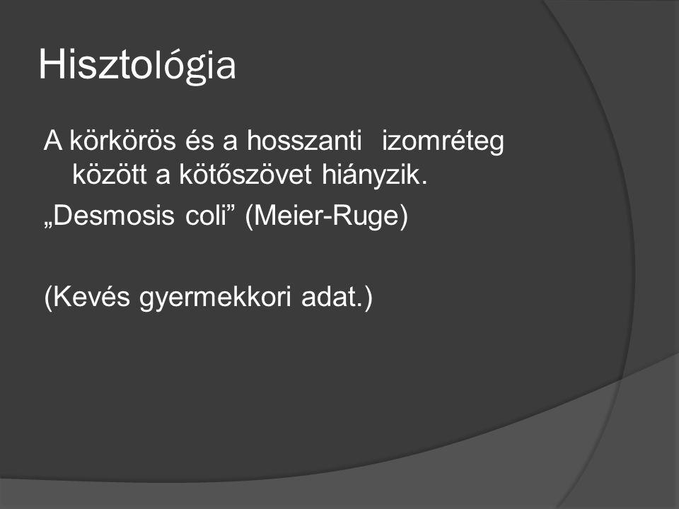 Hisztológia A körkörös és a hosszanti izomréteg között a kötőszövet hiányzik.