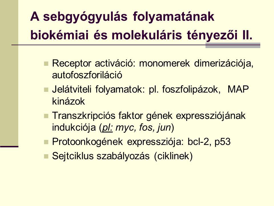 A sebgyógyulás folyamatának biokémiai és molekuláris tényezői II.