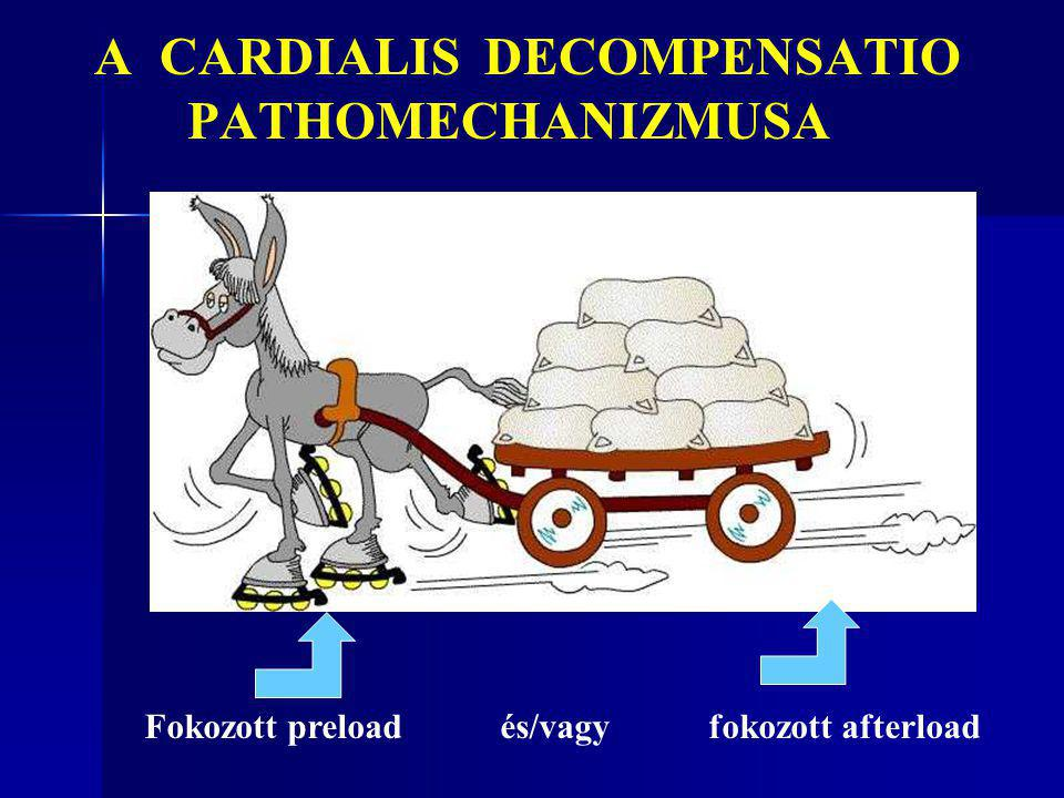A CARDIALIS DECOMPENSATIO PATHOMECHANIZMUSA