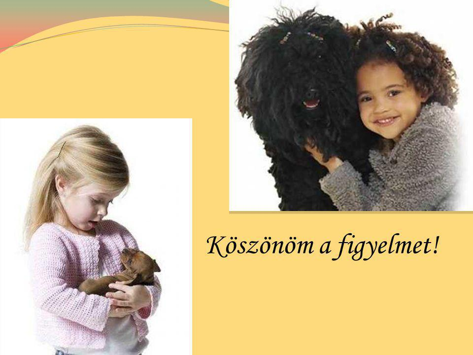 Köszönettel tartozom a Csecsemő- és Gyermekosztály osztályvezető főorvosának Dr. Bodrogi Tibornak és Csecsemő- és Gyermekosztály dolgozóinak.