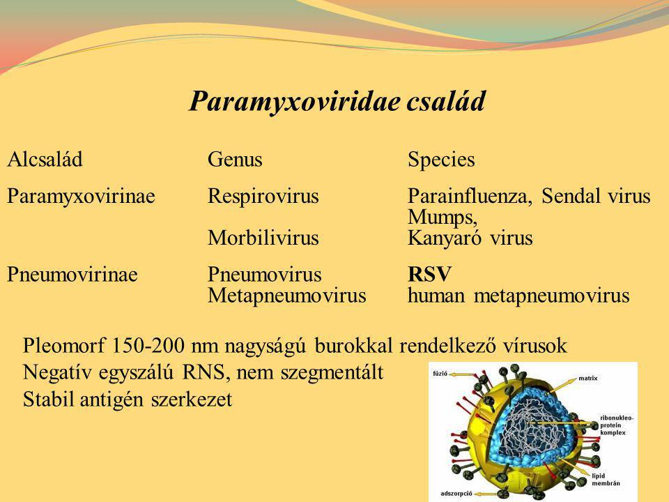 Paramyxoviridae család