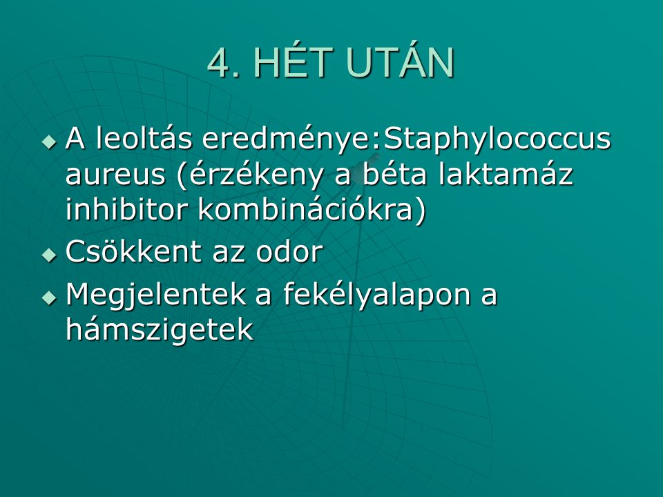4. HÉT UTÁN A leoltás eredménye:Staphylococcus aureus (érzékeny a béta laktamáz inhibitor kombinációkra)