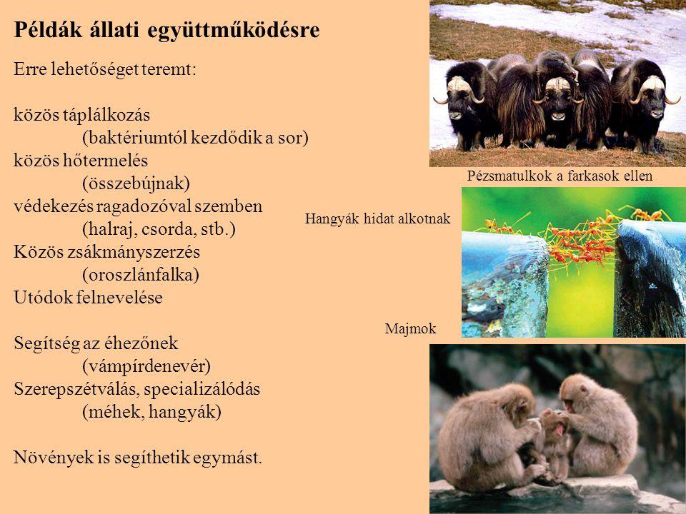 Példák állati együttműködésre