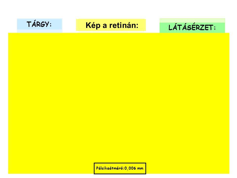 TÁRGY: Kép a retinán: LÁTÁSÉRZET: Pálcikaátmérő:0,006 mm