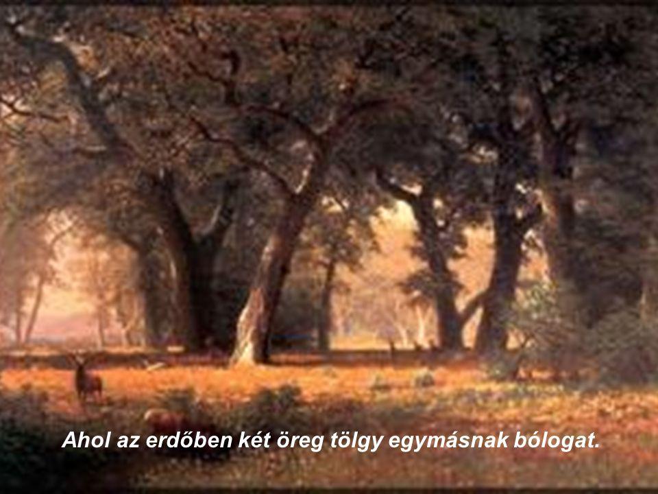 Ahol az erdőben két öreg tölgy egymásnak bólogat.