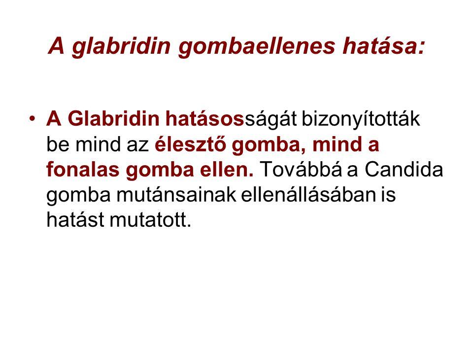 A glabridin gombaellenes hatása: