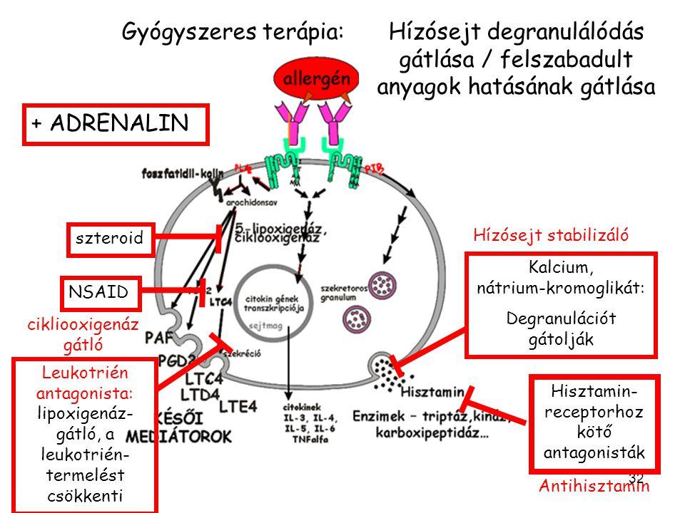 Gyógyszeres terápia: Hízósejt degranulálódás gátlása / felszabadult anyagok hatásának gátlása. + ADRENALIN.