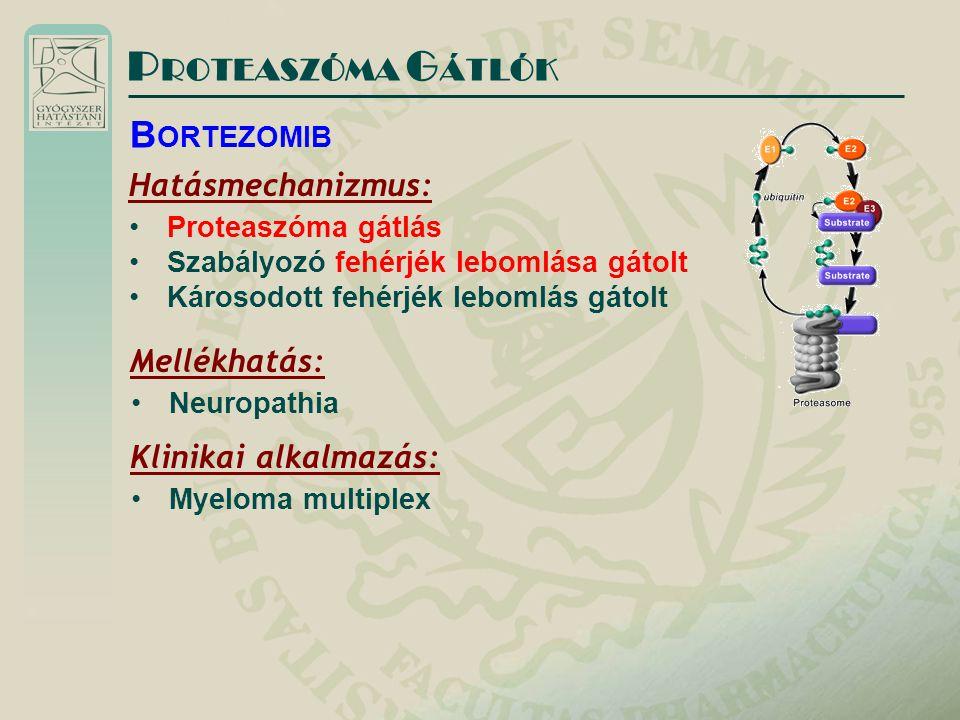 PROTEASZÓMA GÁTLÓK BORTEZOMIB Hatásmechanizmus: Mellékhatás: