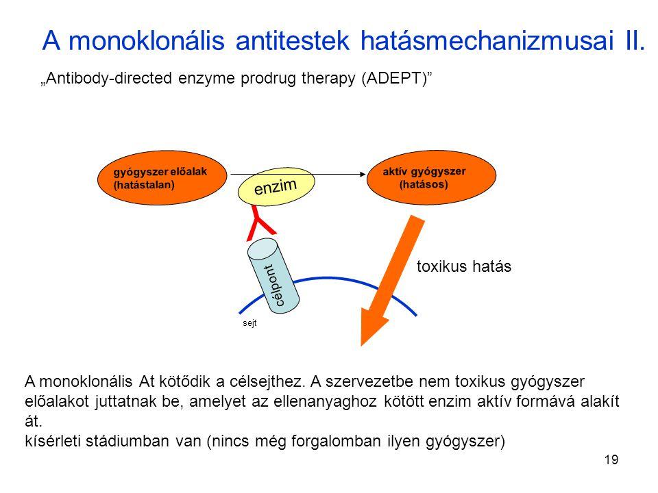 A monoklonális antitestek hatásmechanizmusai II.